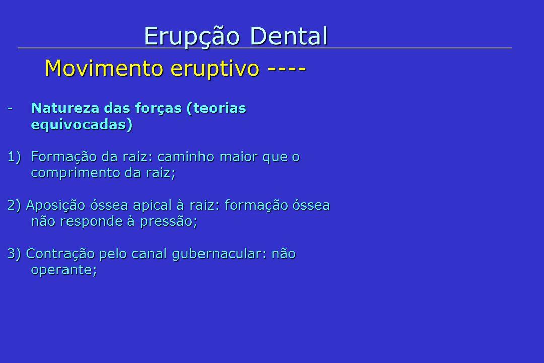 Erupção Dental Movimento eruptivo ---- Movimento eruptivo ---- -Natureza das forças (teorias aceitas) 4) Contração das células do ligamento periodontal: não atuante nas fases iniciais de erupção; 5) Ação do folículo dental: principal fator; 6) Pressão sangüínea e dos fluidos periapicais: atuante em todo o processo; 7) Ação osteoclástica: sua inibição prejudica a erupção.