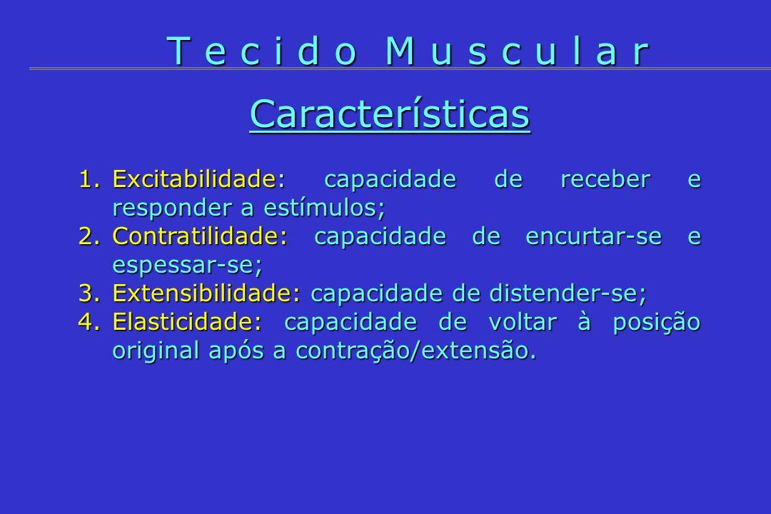 Características 1.Excitabilidade: capacidade de receber e responder a estímulos; 2.Contratilidade: capacidade de encurtar-se e espessar-se; 3.Extensib