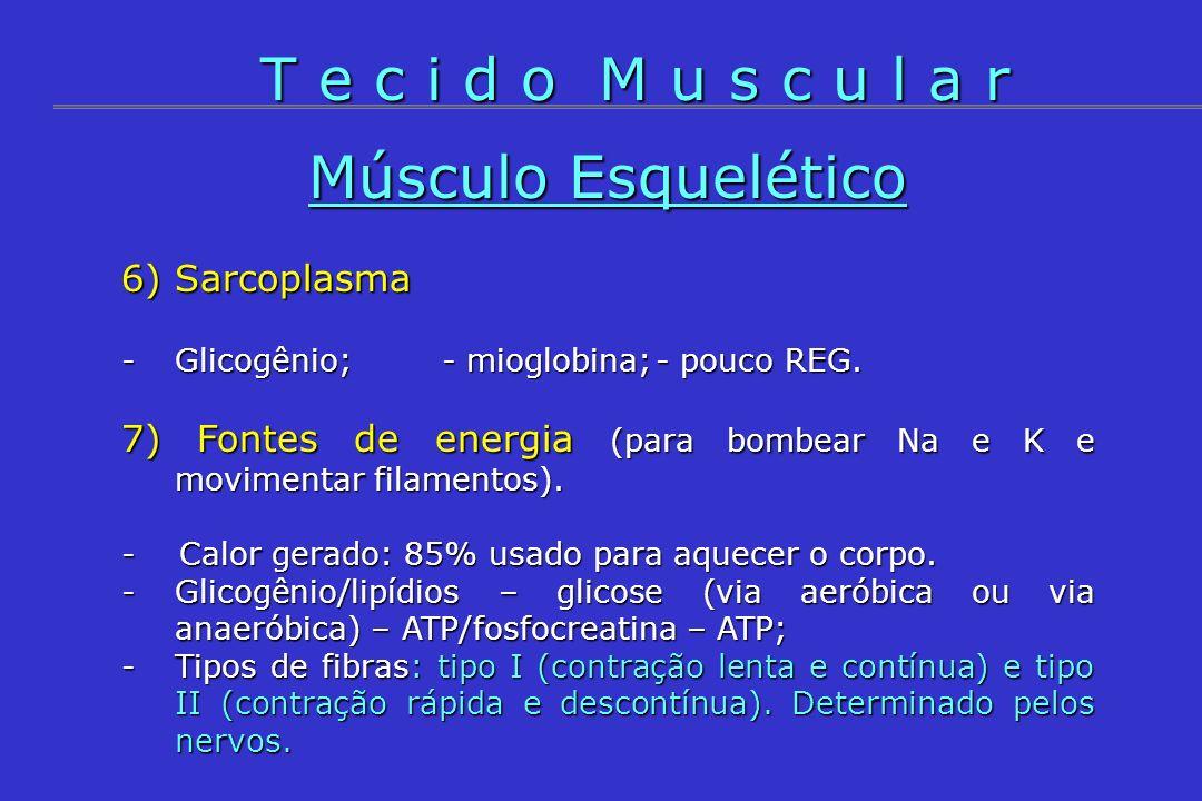 Músculo Esquelético 6) Sarcoplasma -Glicogênio;- mioglobina;- pouco REG. 7) Fontes de energia (para bombear Na e K e movimentar filamentos). - Calor g