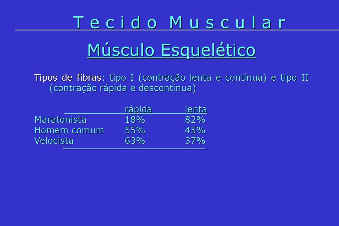 Músculo Esquelético Tipos de fibras: tipo I (contração lenta e contínua) e tipo II (contração rápida e descontínua) rápidalenta Maratonista18%82% Home