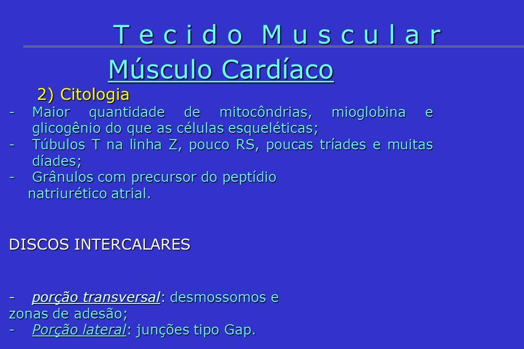 2) Citologia 2) Citologia -Maior quantidade de mitocôndrias, mioglobina e glicogênio do que as células esqueléticas; -Túbulos T na linha Z, pouco RS,