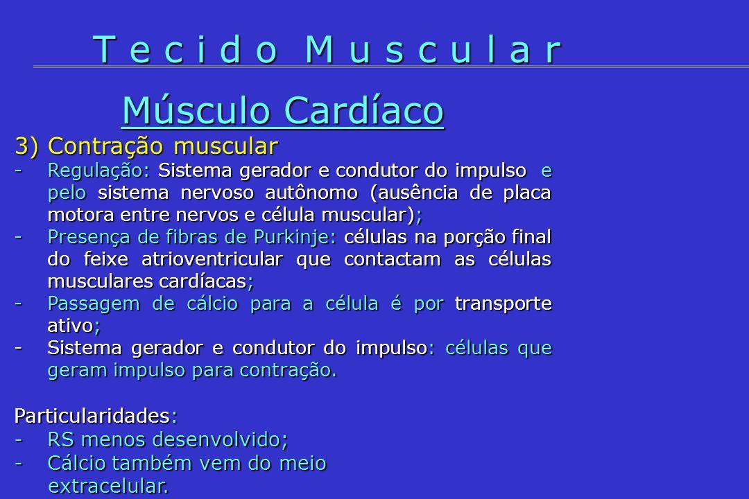Músculo Cardíaco 3) Contração muscular -Regulação: Sistema gerador e condutor do impulso e pelo sistema nervoso autônomo (ausência de placa motora ent