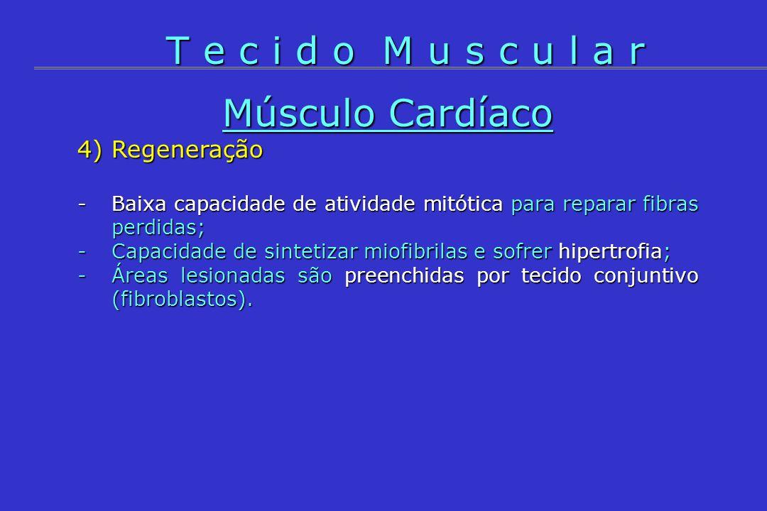 Músculo Cardíaco 4) Regeneração -Baixa capacidade de atividade mitótica para reparar fibras perdidas; -Capacidade de sintetizar miofibrilas e sofrer h