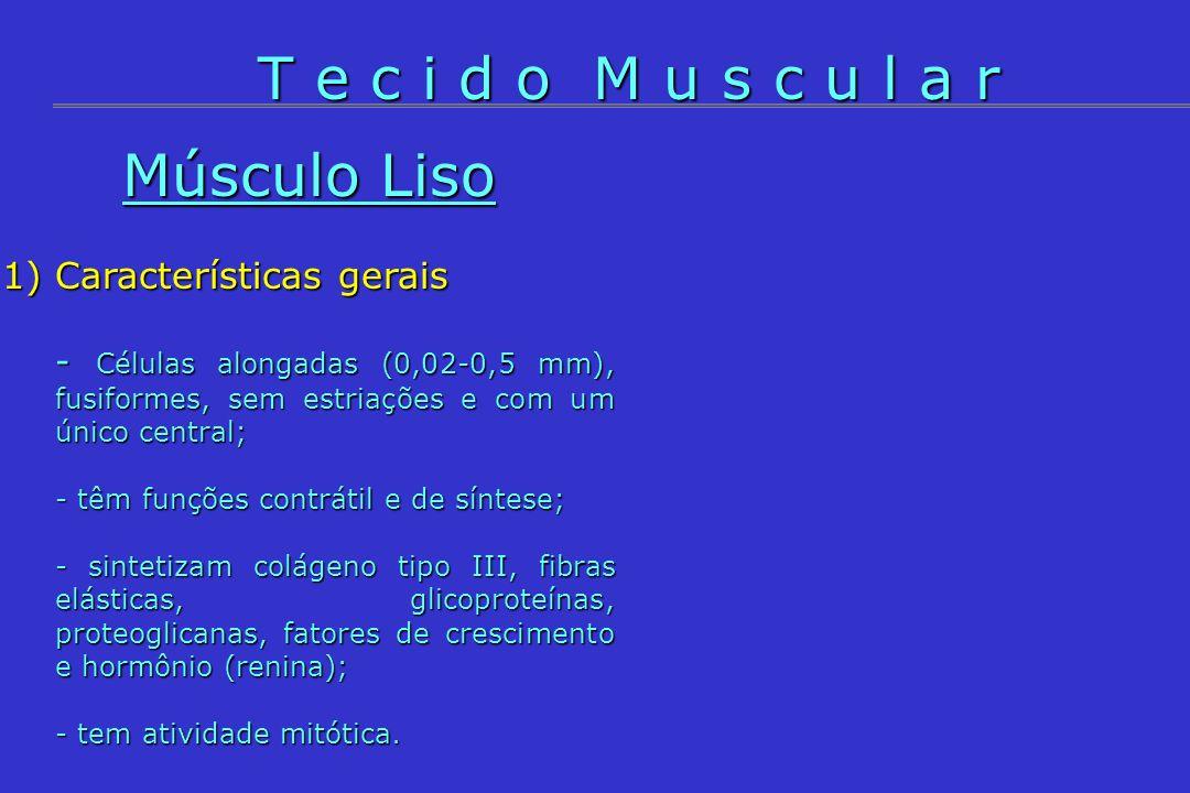Músculo Liso 1)Características gerais - Células alongadas (0,02-0,5 mm), fusiformes, sem estriações e com um único central; - têm funções contrátil e