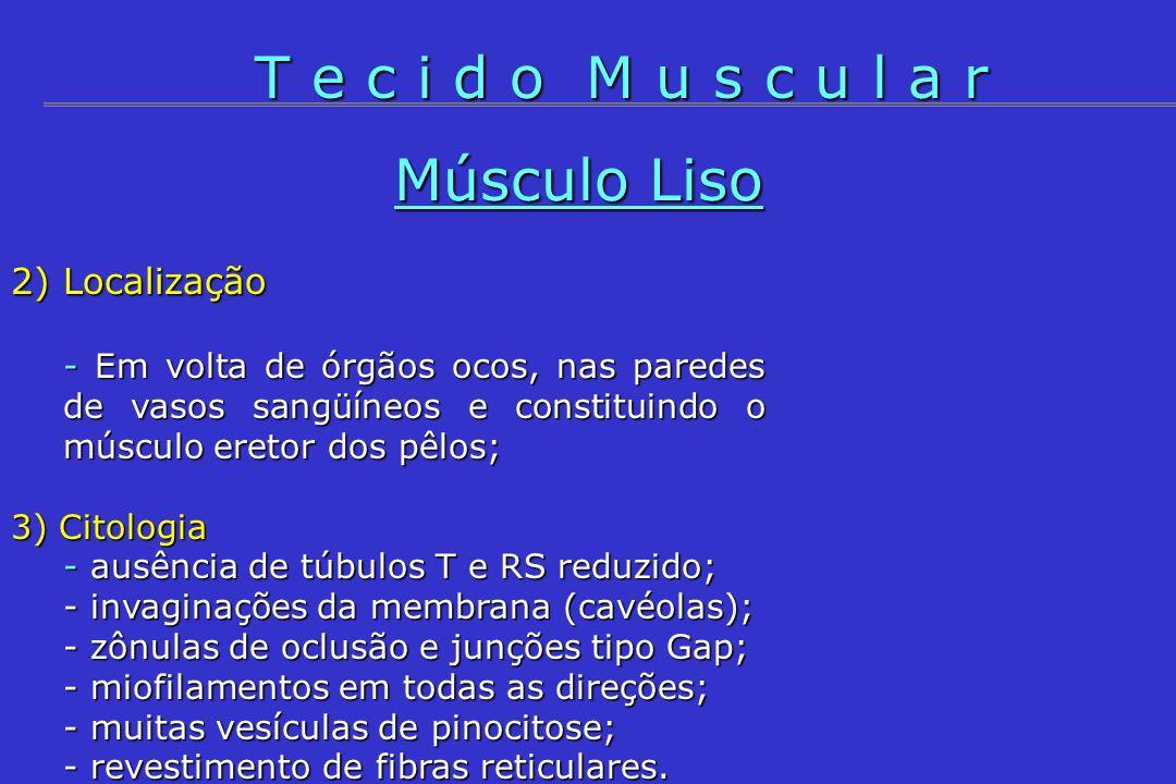 2) Localização - Em volta de órgãos ocos, nas paredes de vasos sangüíneos e constituindo o músculo eretor dos pêlos; 3) Citologia - ausência de túbulo