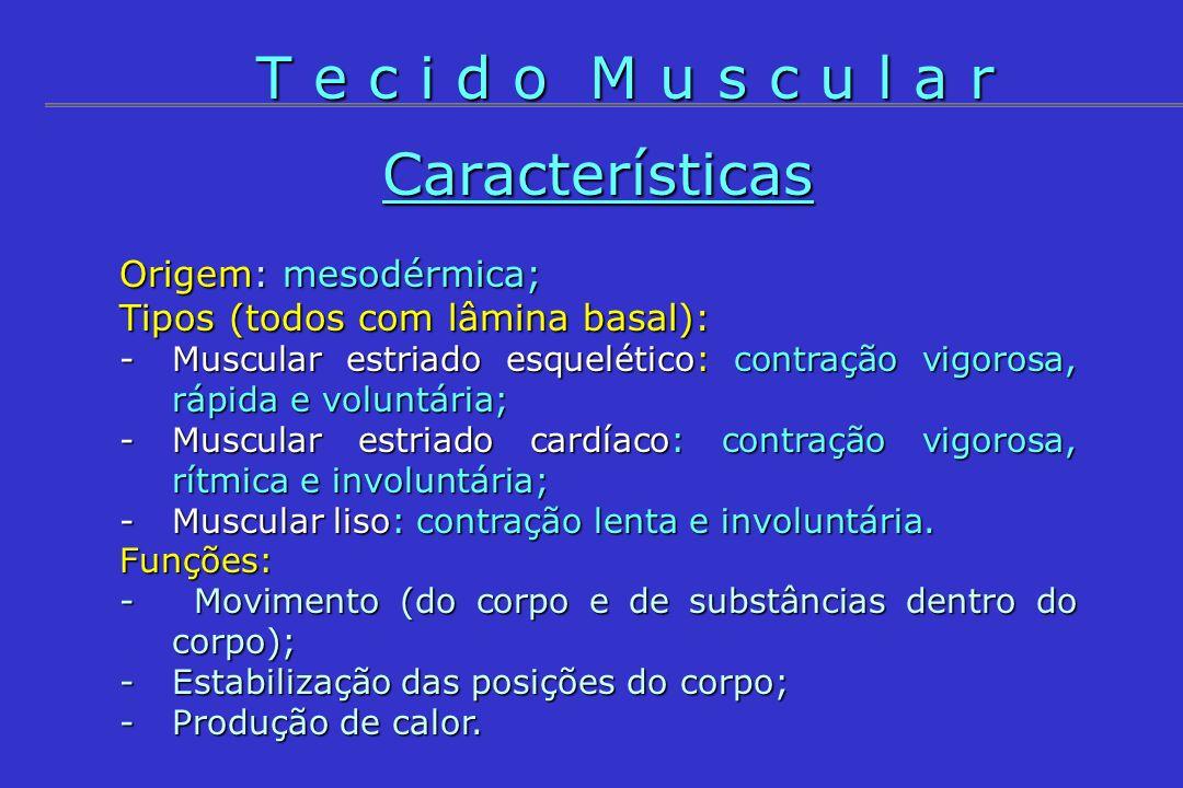 Características Origem: mesodérmica; Tipos (todos com lâmina basal): -Muscular estriado esquelético: contração vigorosa, rápida e voluntária; -Muscula