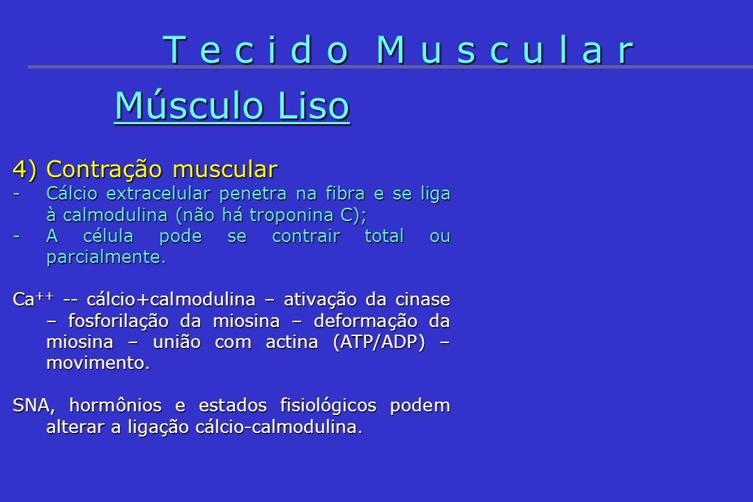 4) Contração muscular -Cálcio extracelular penetra na fibra e se liga à calmodulina (não há troponina C); -A célula pode se contrair total ou parcialm