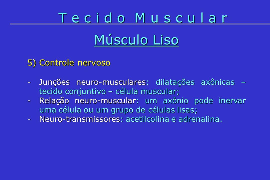 Músculo Liso 5) Controle nervoso -Junções neuro-musculares: dilatações axônicas – tecido conjuntivo – célula muscular; -Relação neuro-muscular: um axô