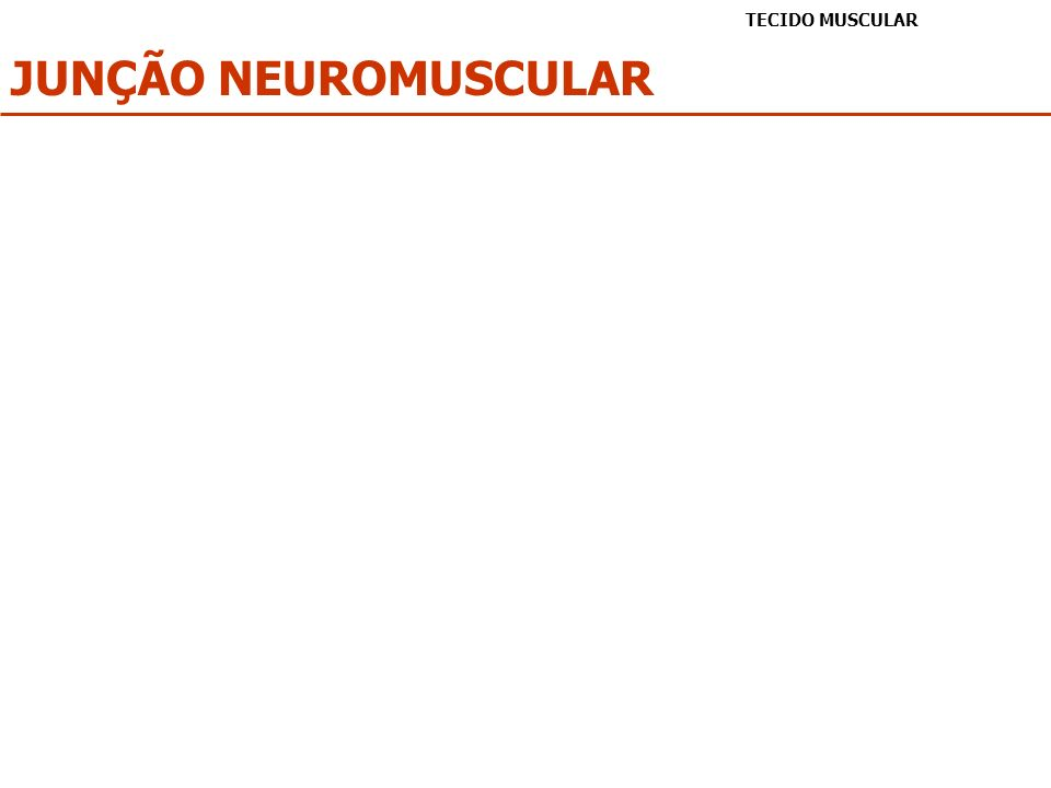 JUNÇÃO NEUROMUSCULAR TECIDO MUSCULAR