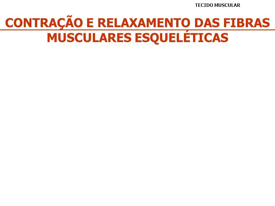 CONTRAÇÃO E RELAXAMENTO DAS FIBRAS MUSCULARES ESQUELÉTICAS TECIDO MUSCULAR