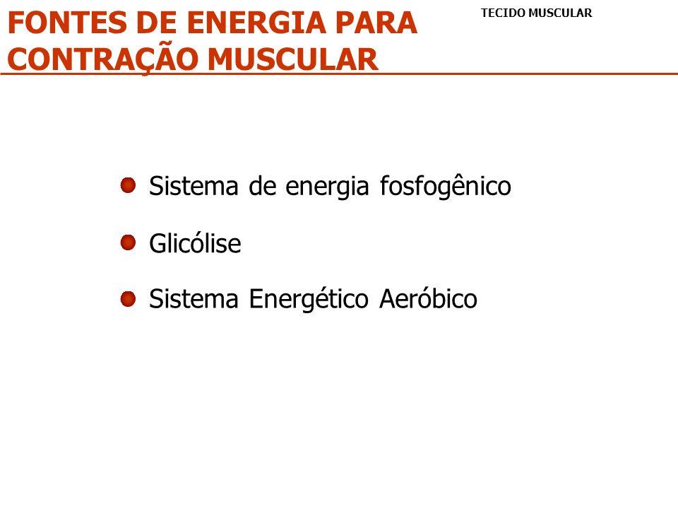FONTES DE ENERGIA PARA CONTRAÇÃO MUSCULAR TECIDO MUSCULAR Sistema de energia fosfogênico Glicólise Sistema Energético Aeróbico
