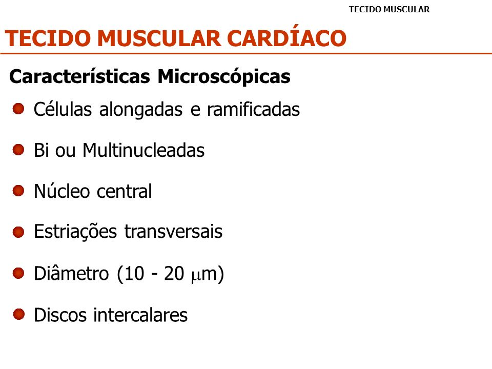 TECIDO MUSCULAR CARDÍACO TECIDO MUSCULAR Células alongadas e ramificadas Bi ou Multinucleadas Núcleo central Estriações transversais Diâmetro (10 - 20