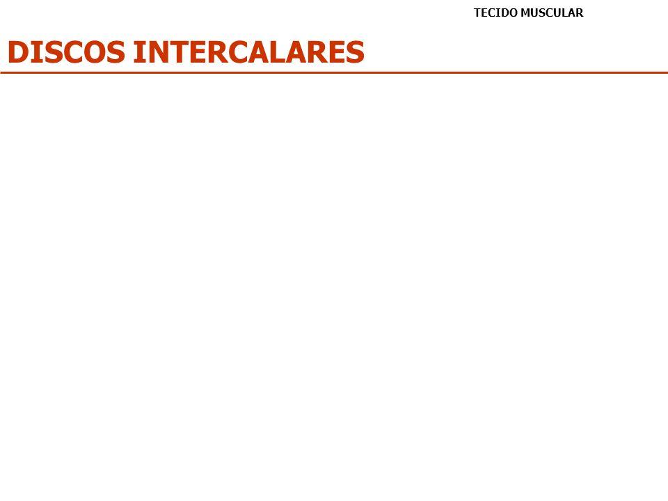 DISCOS INTERCALARES TECIDO MUSCULAR