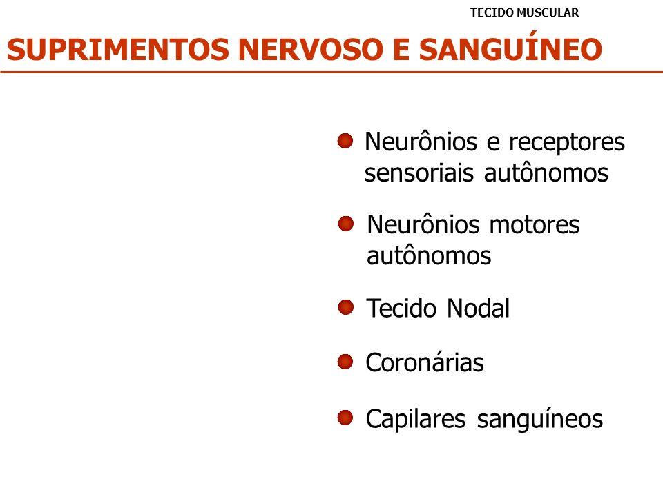 SUPRIMENTOS NERVOSO E SANGUÍNEO TECIDO MUSCULAR Neurônios e receptores sensoriais autônomos Neurônios motores autônomos Tecido Nodal Capilares sanguín