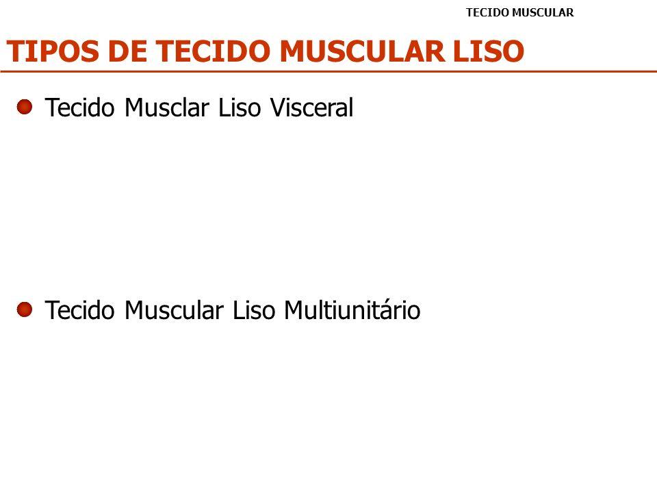 TIPOS DE TECIDO MUSCULAR LISO TECIDO MUSCULAR Tecido Musclar Liso Visceral Tecido Muscular Liso Multiunitário