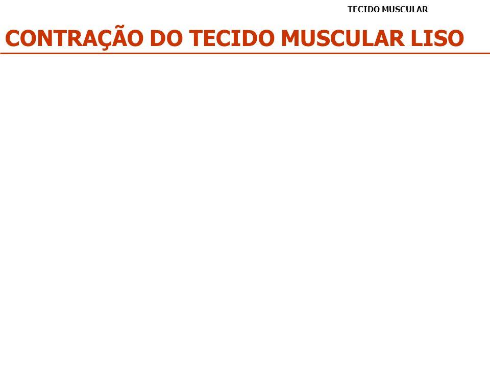 CONTRAÇÃO DO TECIDO MUSCULAR LISO TECIDO MUSCULAR