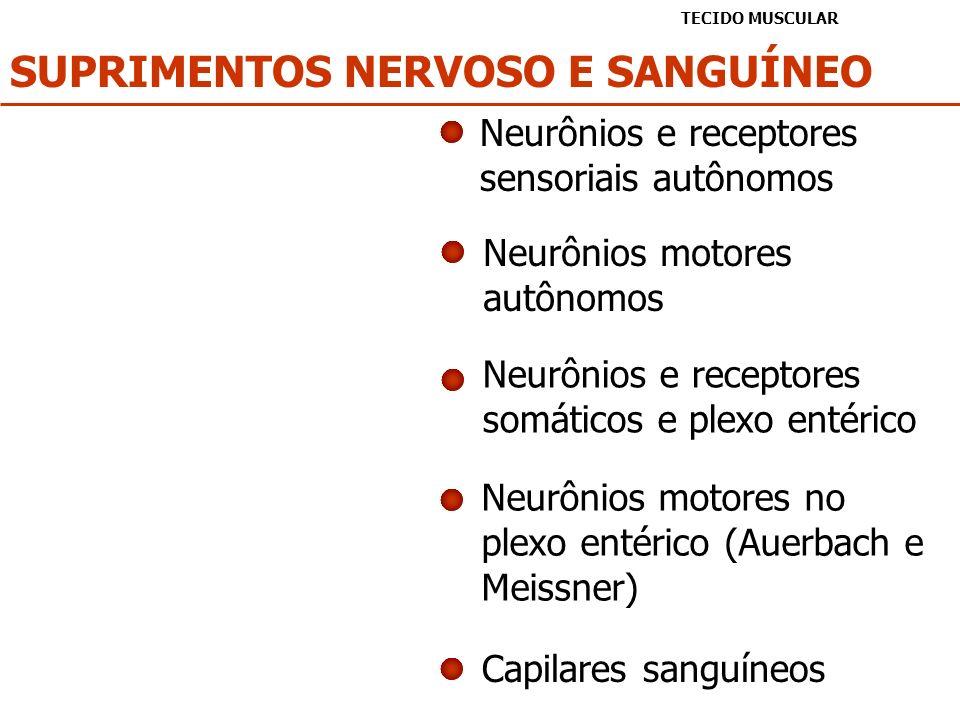 SUPRIMENTOS NERVOSO E SANGUÍNEO TECIDO MUSCULAR Neurônios e receptores sensoriais autônomos Neurônios motores autônomos Neurônios e receptores somátic