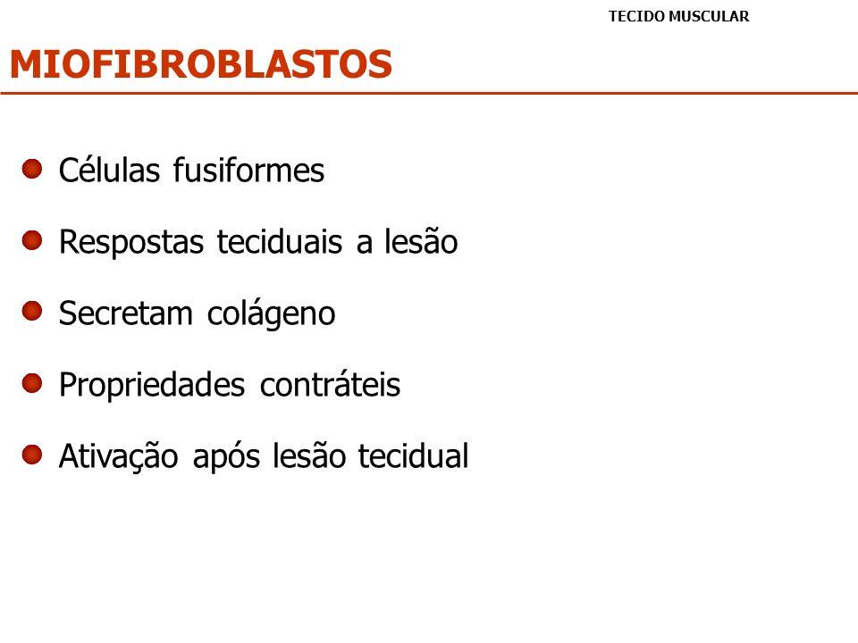 MIOFIBROBLASTOS TECIDO MUSCULAR Células fusiformes Respostas teciduais a lesão Secretam colágeno Propriedades contráteis Ativação após lesão tecidual