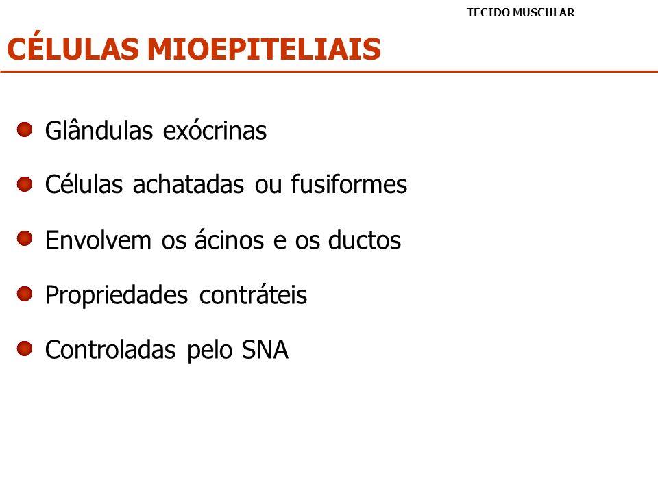 CÉLULAS MIOEPITELIAIS TECIDO MUSCULAR Células achatadas ou fusiformes Envolvem os ácinos e os ductos Propriedades contráteis Glândulas exócrinas Contr