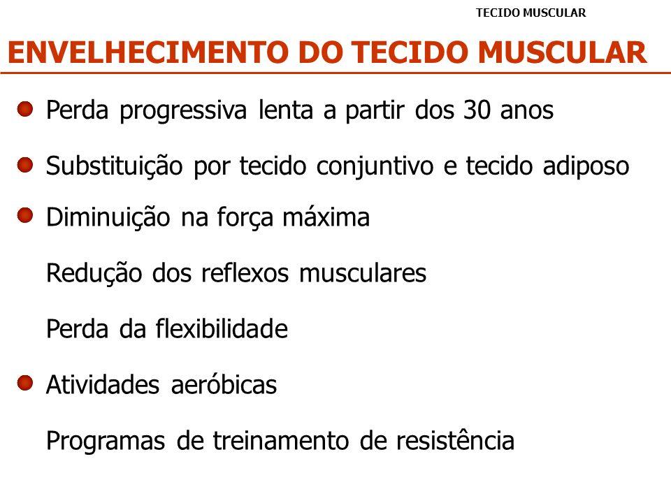 ENVELHECIMENTO DO TECIDO MUSCULAR TECIDO MUSCULAR Perda progressiva lenta a partir dos 30 anos Substituição por tecido conjuntivo e tecido adiposo Dim