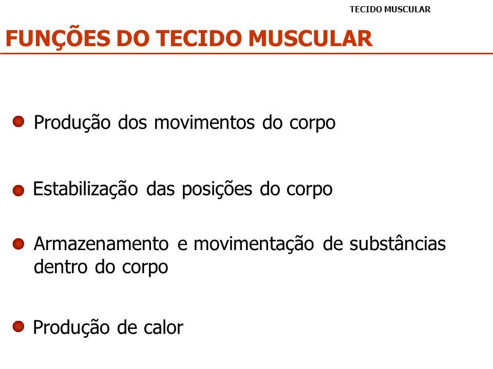 FUNÇÕES DO TECIDO MUSCULAR TECIDO MUSCULAR Produção dos movimentos do corpo Estabilização das posições do corpo Armazenamento e movimentação de substâ