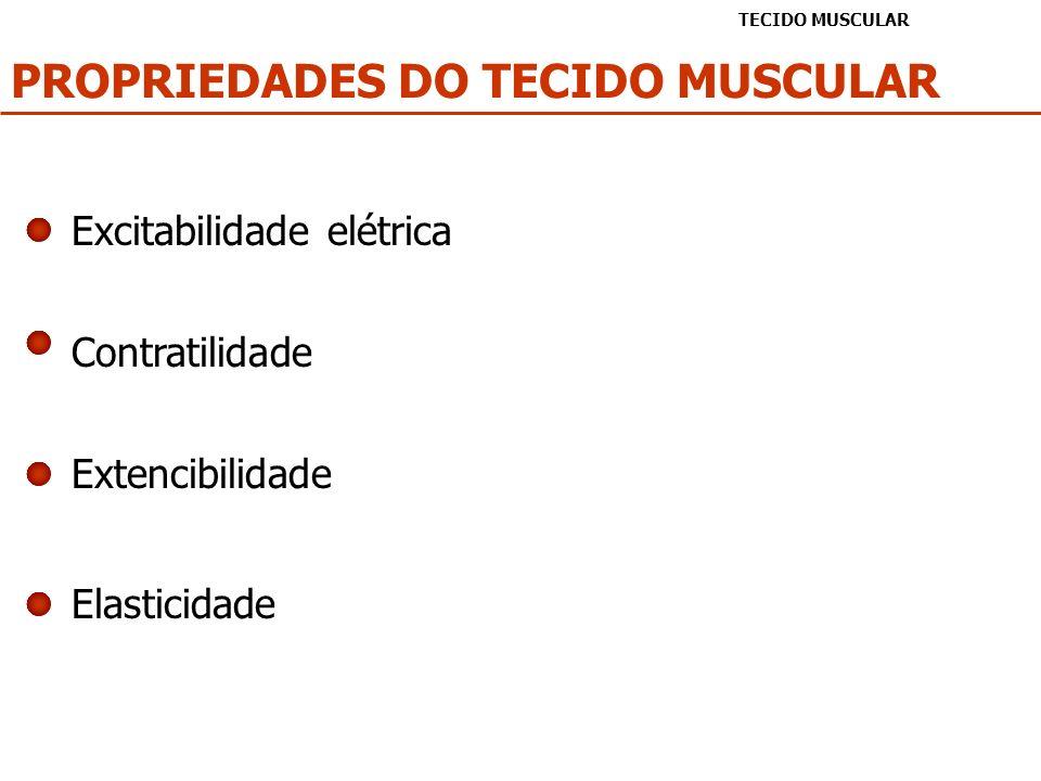 Excitabilidade elétrica PROPRIEDADES DO TECIDO MUSCULAR TECIDO MUSCULAR Contratilidade Extencibilidade Elasticidade