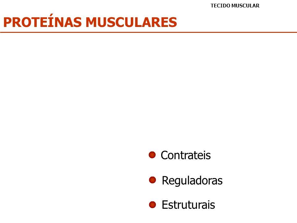 PROTEÍNAS MUSCULARES TECIDO MUSCULAR Contrateis Reguladoras Estruturais
