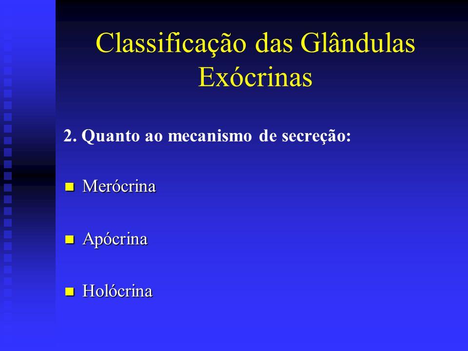 2. Quanto ao mecanismo de secreção: Merócrina Merócrina Apócrina Apócrina Holócrina Holócrina Classificação das Glândulas Exócrinas