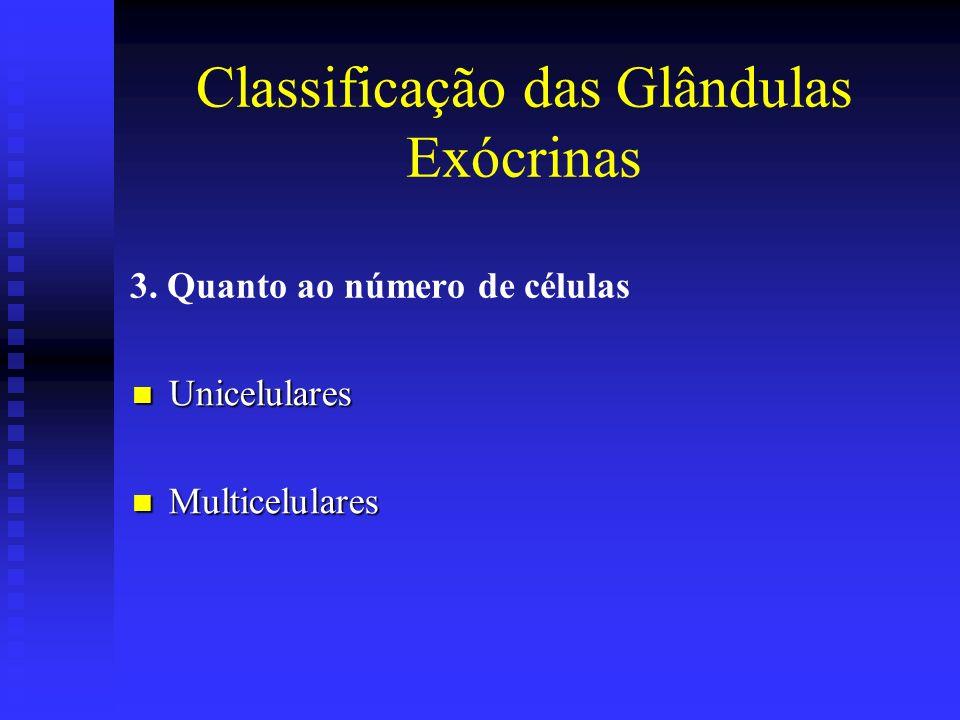3. Quanto ao número de células Unicelulares Unicelulares Multicelulares Multicelulares Classificação das Glândulas Exócrinas