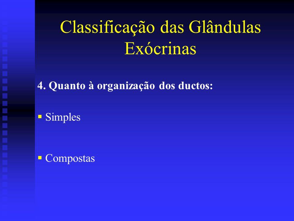 4. Quanto à organização dos ductos: Simples Compostas Classificação das Glândulas Exócrinas