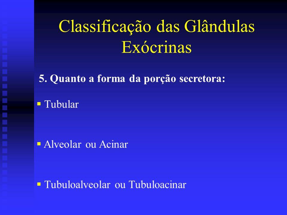 5. Quanto a forma da porção secretora: Tubular Alveolar ou Acinar Tubuloalveolar ou Tubuloacinar Classificação das Glândulas Exócrinas