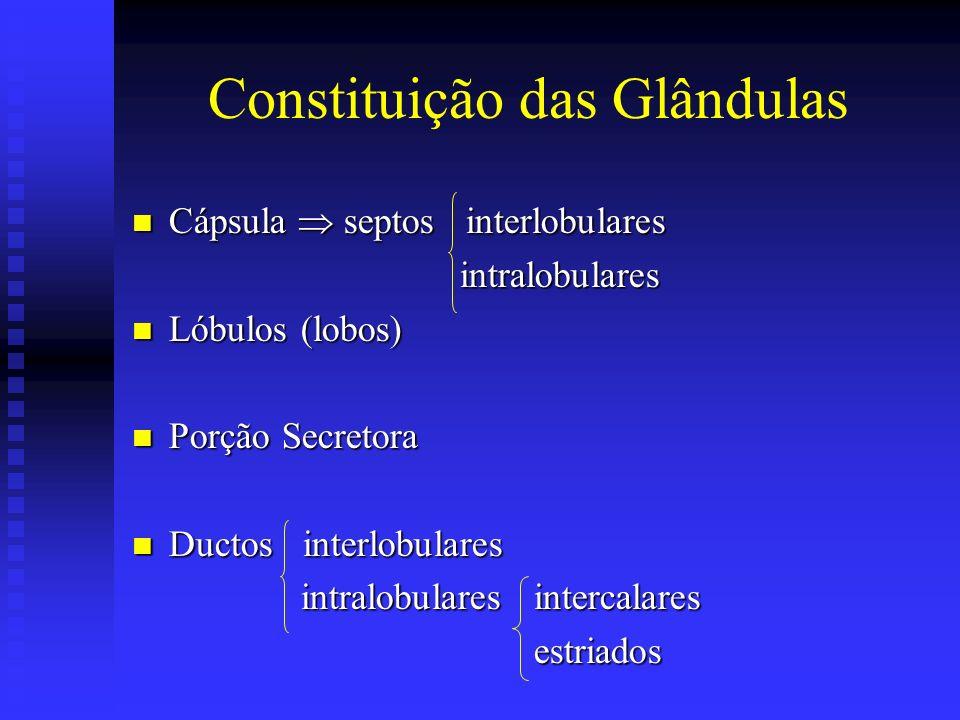Constituição das Glândulas Cápsula septos interlobulares Cápsula septos interlobulares intralobulares intralobulares Lóbulos (lobos) Lóbulos (lobos) P