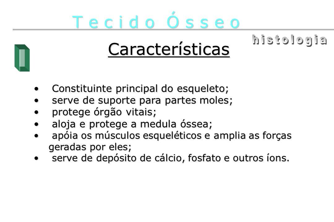 Características Constituinte principal do esqueleto; Constituinte principal do esqueleto; serve de suporte para partes moles; serve de suporte para pa