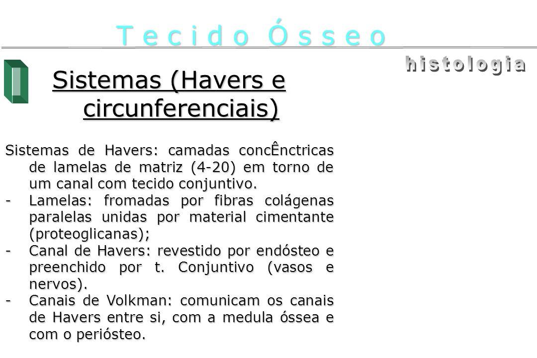 Sistemas (Havers e circunferenciais) Sistemas de Havers: camadas concÊnctricas de lamelas de matriz (4-20) em torno de um canal com tecido conjuntivo.