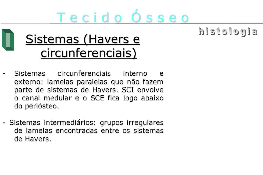 Sistemas (Havers e circunferenciais) -Sistemas circunferenciais interno e externo: lamelas paralelas que não fazem parte de sistemas de Havers. SCI en