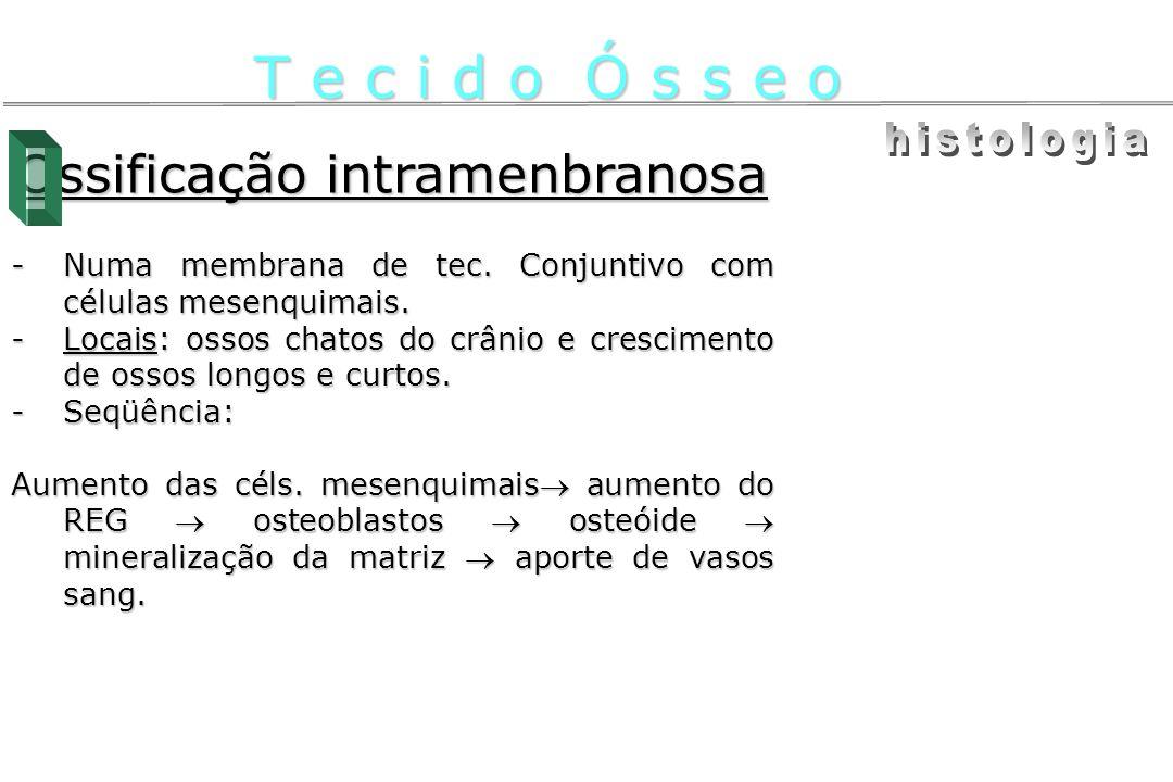 Ossificação intramenbranosa -Numa membrana de tec. Conjuntivo com células mesenquimais. -Locais: ossos chatos do crânio e crescimento de ossos longos