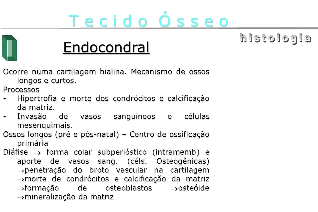 Endocondral Ocorre numa cartilagem hialina. Mecanismo de ossos longos e curtos. Processos -Hipertrofia e morte dos condrócitos e calcificação da matri