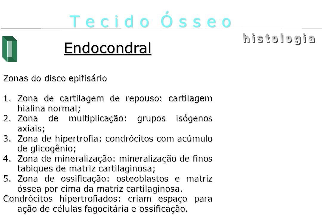 Endocondral Zonas do disco epifisário 1.Zona de cartilagem de repouso: cartilagem hialina normal; 2.Zona de multiplicação: grupos isógenos axiais; 3.Z