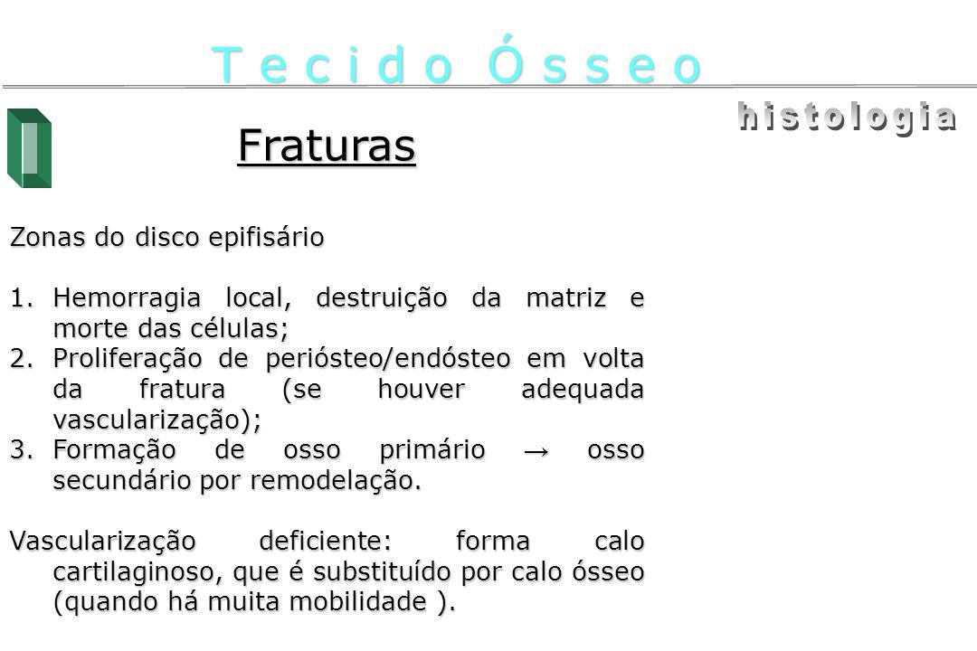 Fraturas Zonas do disco epifisário 1.Hemorragia local, destruição da matriz e morte das células; 2.Proliferação de periósteo/endósteo em volta da frat