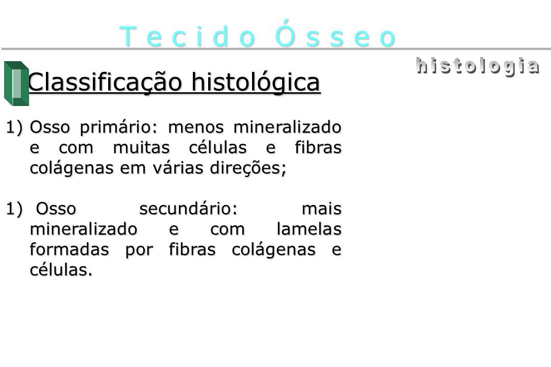 Classificação histológica 1)Osso primário: menos mineralizado e com muitas células e fibras colágenas em várias direções; 1) Osso secundário: mais min