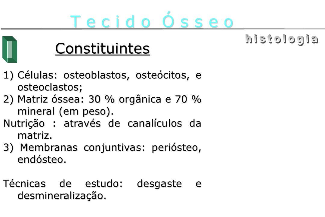 Constituintes 1)Células: osteoblastos, osteócitos, e osteoclastos; 2)Matriz óssea: 30 % orgânica e 70 % mineral (em peso). Nutrição : através de canal