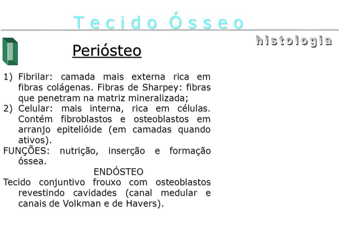 Endocondral Ossos longos (pós-natal) – Centro de ossificação secundária Epífise aporte de vasos (céls.