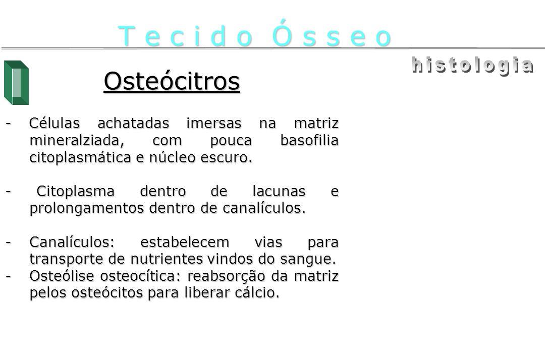Osteócitros - Células achatadas imersas na matriz mineralziada, com pouca basofilia citoplasmática e núcleo escuro. - Citoplasma dentro de lacunas e p