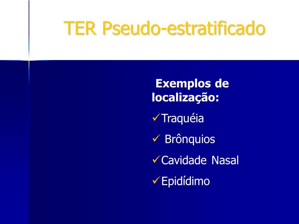 TER Pseudo-estratificado Exemplos de localização: Traquéia Brônquios Cavidade Nasal Epidídimo
