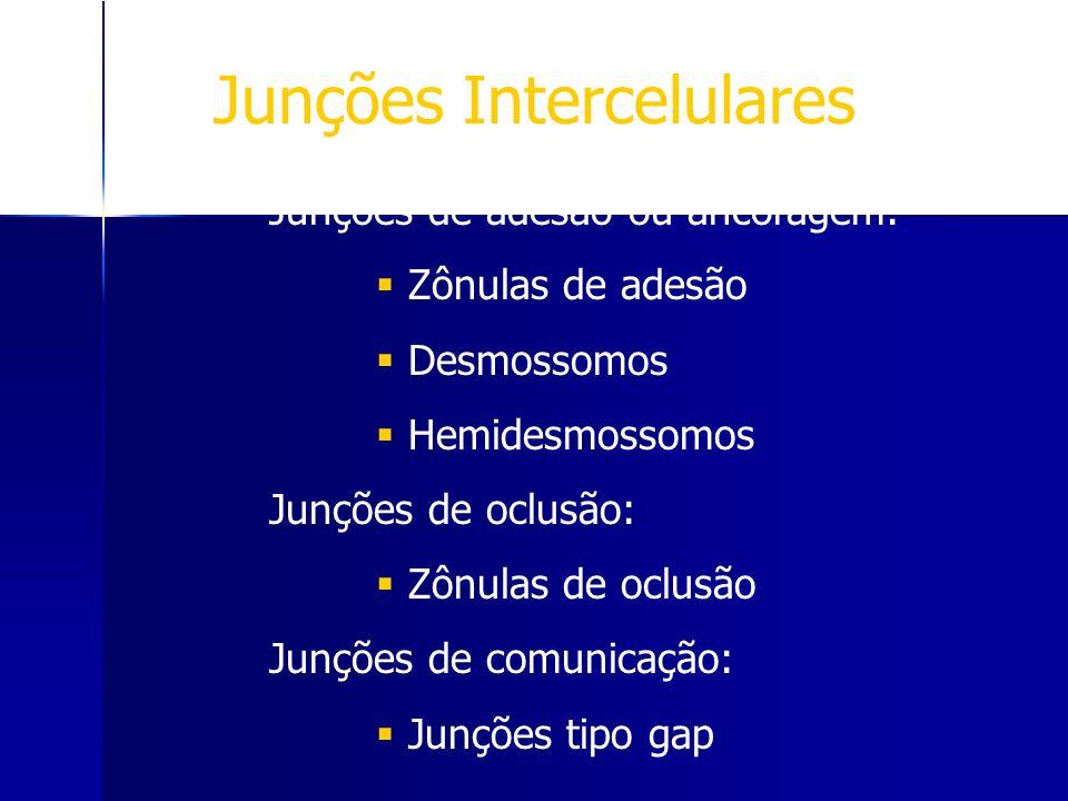 Junções Intercelulares Junções de adesão ou ancoragem: Zônulas de adesão Desmossomos Hemidesmossomos Junções de oclusão: Zônulas de oclusão Junções de