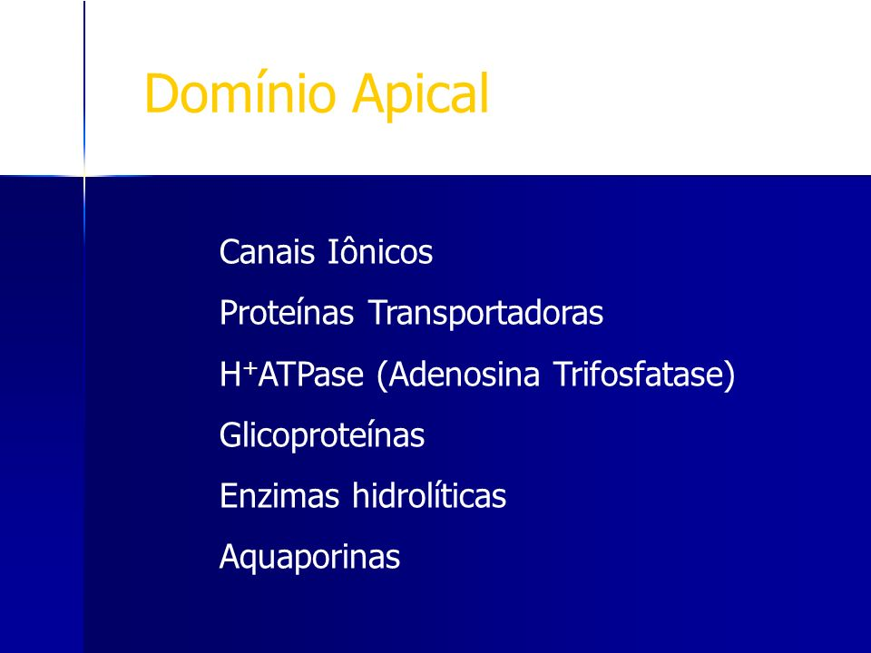 Domínio Apical Canais Iônicos Proteínas Transportadoras H + ATPase (Adenosina Trifosfatase) Glicoproteínas Enzimas hidrolíticas Aquaporinas