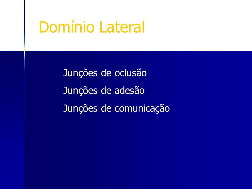 Junções de oclusão Junções de adesão Junções de comunicação Domínio Lateral