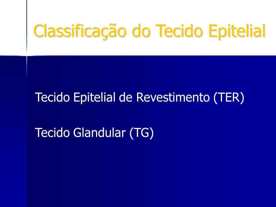 Classificação do Tecido Epitelial Tecido Epitelial de Revestimento (TER) Tecido Glandular (TG)