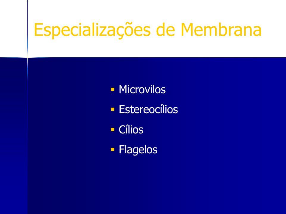 Especializações de Membrana Microvilos Estereocílios Cílios Flagelos