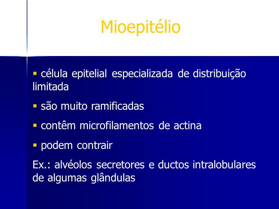 Mioepitélio célula epitelial especializada de distribuição limitada são muito ramificadas contêm microfilamentos de actina podem contrair Ex.: alvéolo